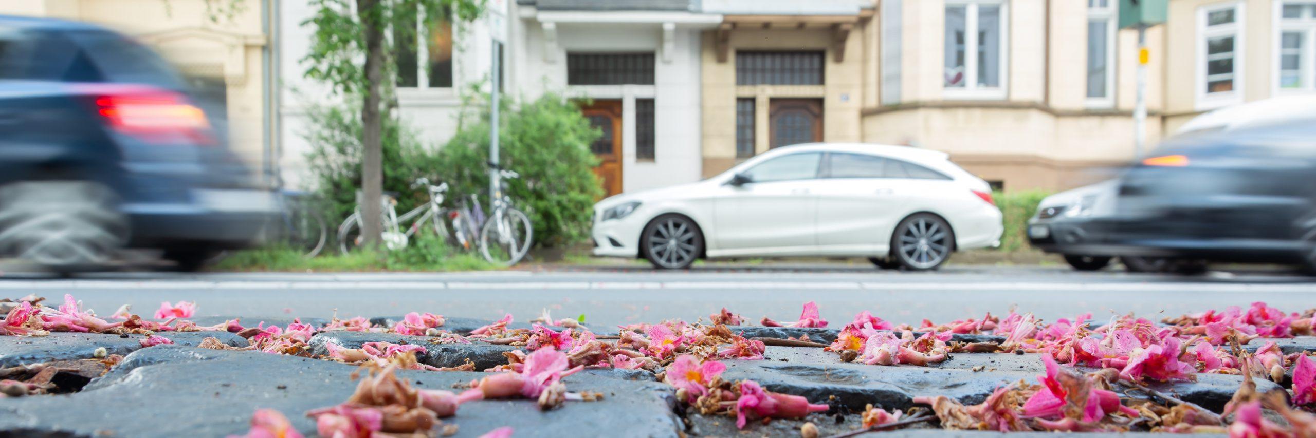 Straße mit Blütenblättern und geparkten Autos