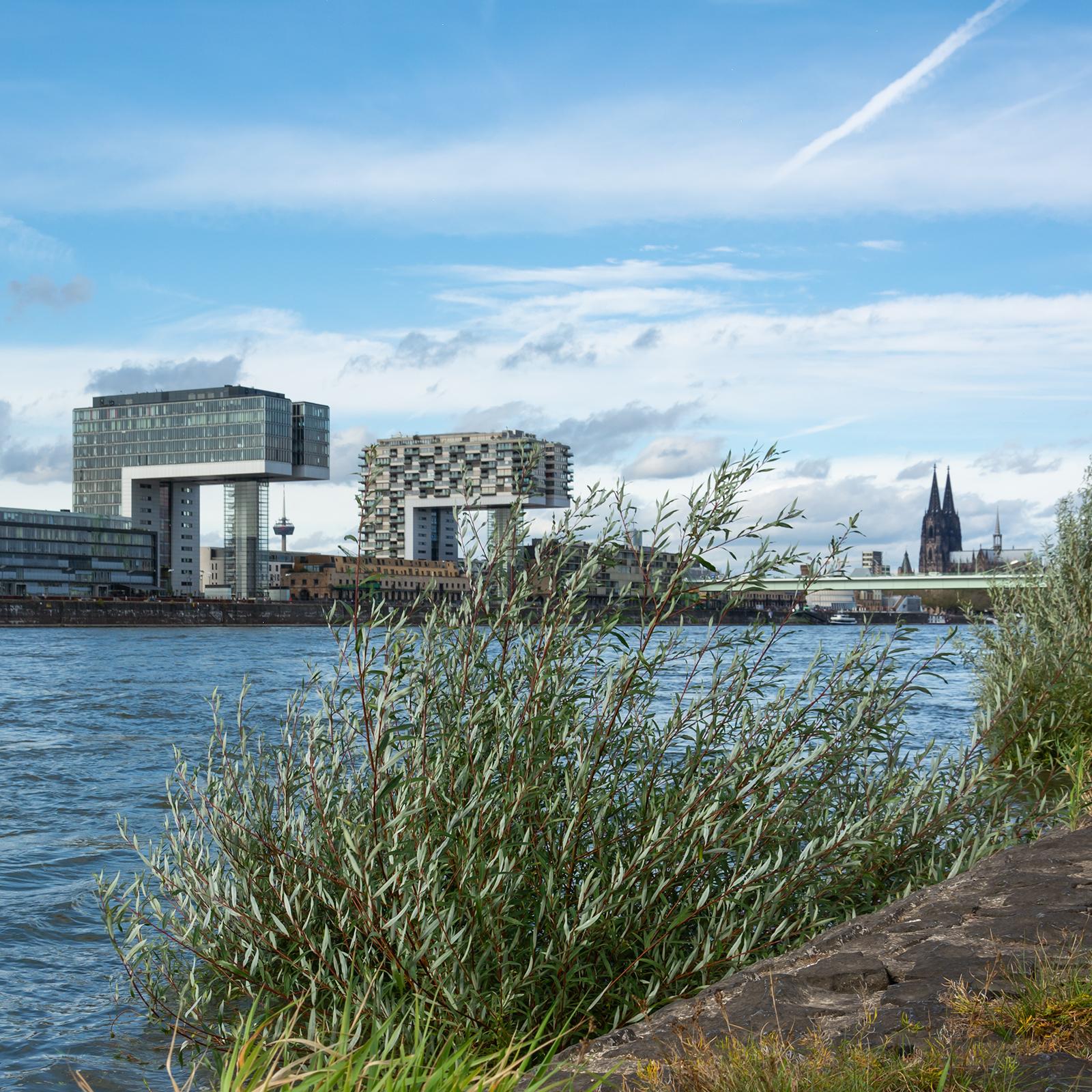 Rhein; Köln; Kranhäuser; Rheinmetropole; Köln mobil 2025