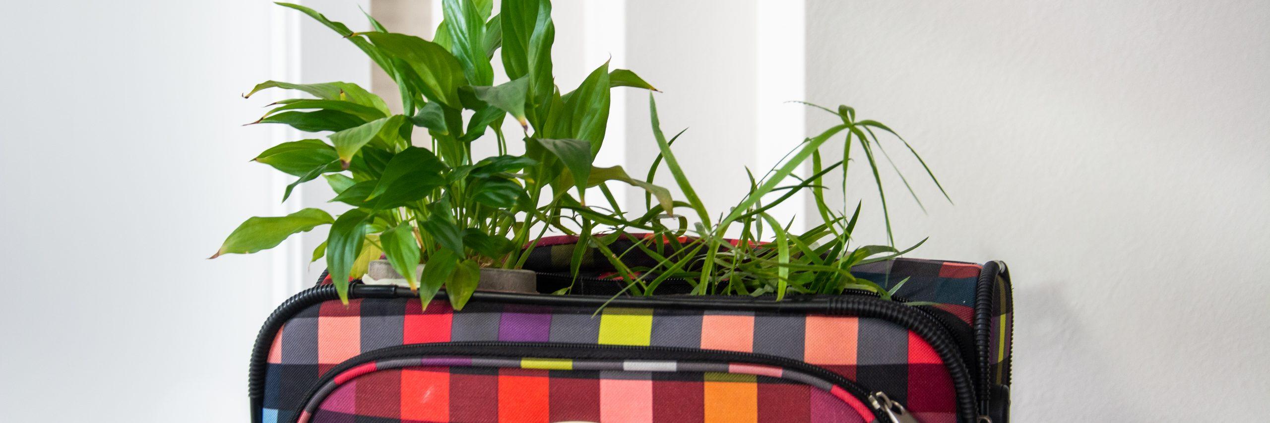 Koffer; Reisen; Pflanzen; nachhaltig reisen; nachhaltige Entwicklung leben